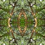 """""""028 - ABSTRACT TREES, #28, EDIT E"""" by nawfalnur"""