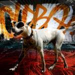 """""""surfdog7h copy"""" by tomgreaves"""