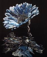 AP-014 Blue Chrysanthemum