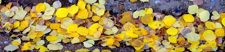leaves on ground expressive