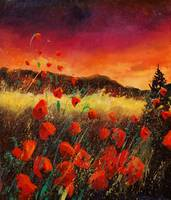 Sunset red poppies 67