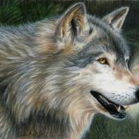 Timber Wolf Art Prints & Posters by Carla Kurt