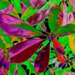 """Colors"" by SanaKiy"