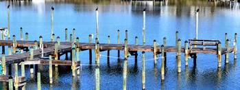 birds on pilings