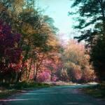 """""""Autumn Forest"""" by angelabruno"""