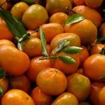 """Tangerines"" by patriciaschnepf"