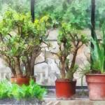"""Bonsai in Greenhouse"" by susansartgallery"