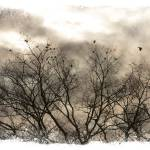 """Winter Sky"" by beckybarnhardt"