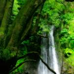 """Waterfall in Azores islands"" by gavila"