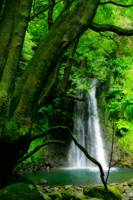 Waterfall in Azores islands