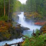 """Magical Places Of Mount Rainier National Park"" by artsandi"