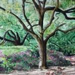 """""""Tree in Sunlight"""" by bphillips"""