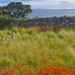 """Ireland,aran islands inishmaan , study 1"" by beppeschiavonephotography"