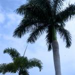 """""""Palms"""" by SanaKiy"""