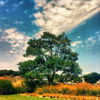 Sag Harbor Tree