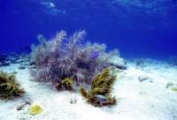 Sea Fan on the Sand