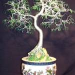"""ORIENTAL BONSAI - Wire Tree Sculpture"" by WireTrees"