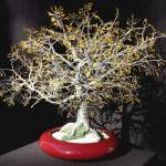 """YELLOW OAK - Wire Tree Sculpture"" by WireTrees"