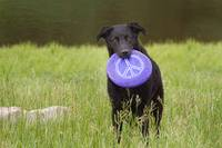dogs_peace_too