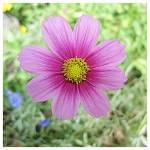 """Ode to Spring"" by JamesHanlon"