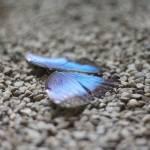 """""""Schmetterling"""" by tatica"""