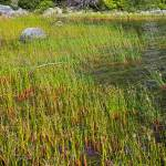 """Grasses at Bubble Pond"" by LyndaLehmann"