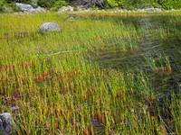 Grasses at Bubble Pond