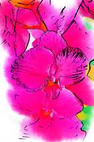 Abstract Orchid 2