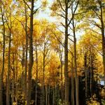 """""""Autumn Sunlight"""" by GregStringham"""