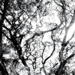 """ABSTRACT ANSON ROAD TREE, #3, EDIT C"" by nawfalnur"