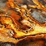 """""""Rust"""" by SeanFineArt"""