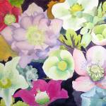"""""""hellebores galore"""" by studiobythesound"""