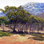 """Eucalyptus Grove 2 Harbors Catalina Island"" by randysprout2004"
