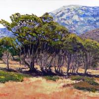 Eucalyptus Grove 2 Harbors Catalina Island Art Prints & Posters by Randy Sprout
