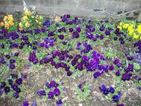 Purple and Yellow Flowers II