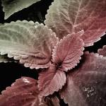 """""""leaves red tint"""" by create4fun"""