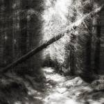 """Infrared Forest"" by annayanev"