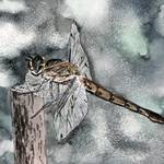 """dragonfly art print"" by derekmccrea"