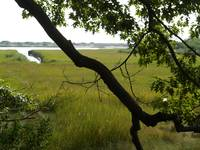 A Large Branch Cuts Into A Salt Water Marsh