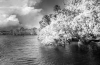 Blue Springs - Infrared II