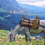 """In Clover on Mt. Parnassus, Delphi, Greece"" by PriscillaTurner"