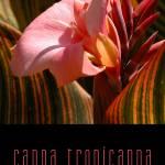 """Cana Tropicanna"" by ArmenKojoyian"