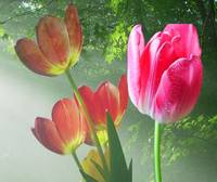 Tulips in the Forest