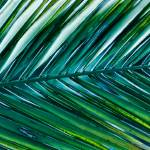 """Vibrant Palm"" by boppintheblues"