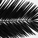 """Palm Frond"" by boppintheblues"