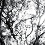 """ABSTRACT ANSON ROAD TREE, #5, EDIT C"" by nawfalnur"