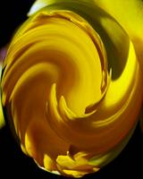 Yellow Twist