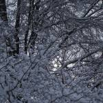 """Tree Branches Coated With Snow"" by MikeMBurkeDesigns"