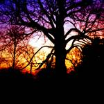"""Stunning Colorful Sunset Behind Massive Tree"" by MikeMBurkeDesigns"