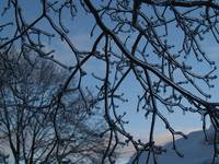 Ice Coated Tree Branches